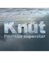 Knut, l'ourson superstar